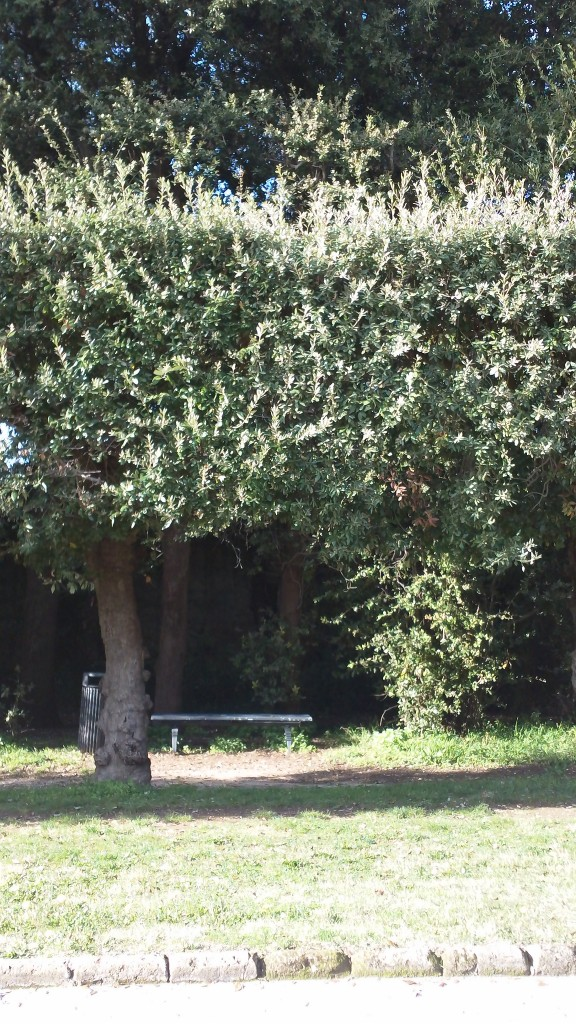 A day trip from Rome: Shaded benches in the garden of the Palace