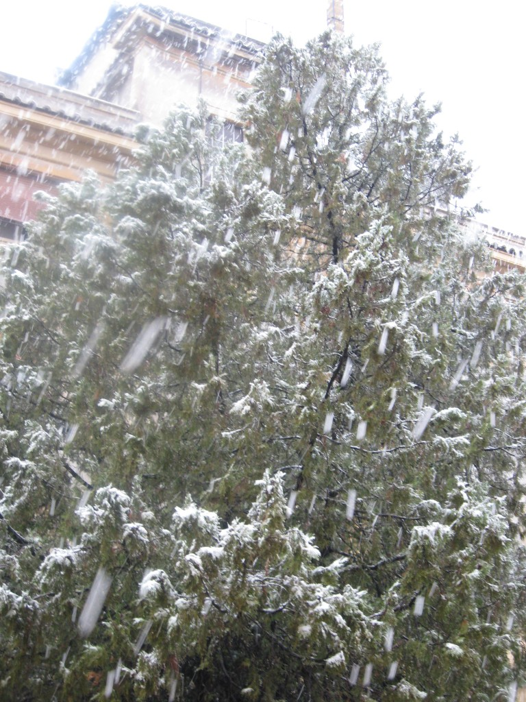 Snow in Rome 2012: It's Snowing